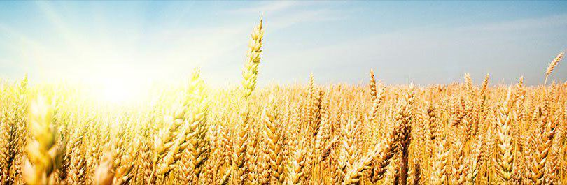 From the Field to Your Table with Rogers Foods